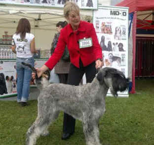 Best Dog Shampoo for Schunauzer, Terrier Shampoo, Champion Dogs Shampoo, Show Dog Shampoo, Crufts