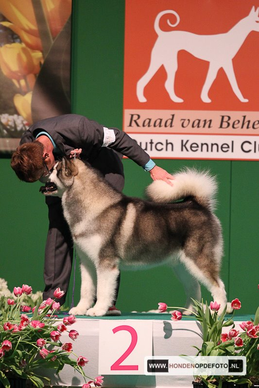 Euro Dog Show 2011, Reserve Best In Show, BIG, BOB Alaskan Malamute using MD10 Texture Herbal
