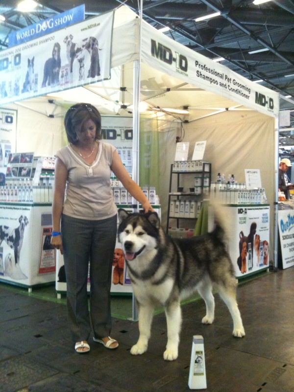 Best Dog Shampoo for Alaskan Malamute, MD10 Herbal Texture