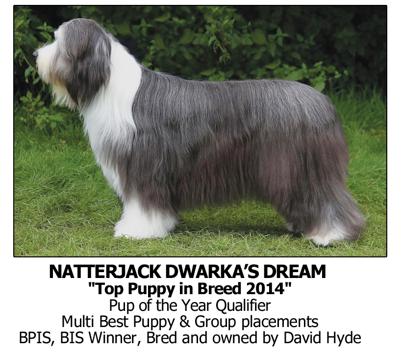 BestDogShampoo, Best Dog Shampoo for Bearded Collie