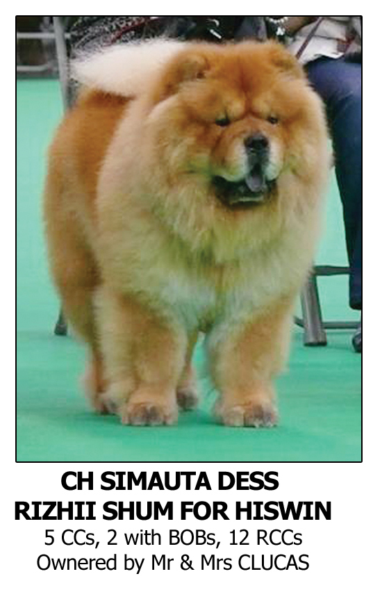 BestDogShampoo, Best Dog Shampoo for Chow Chow
