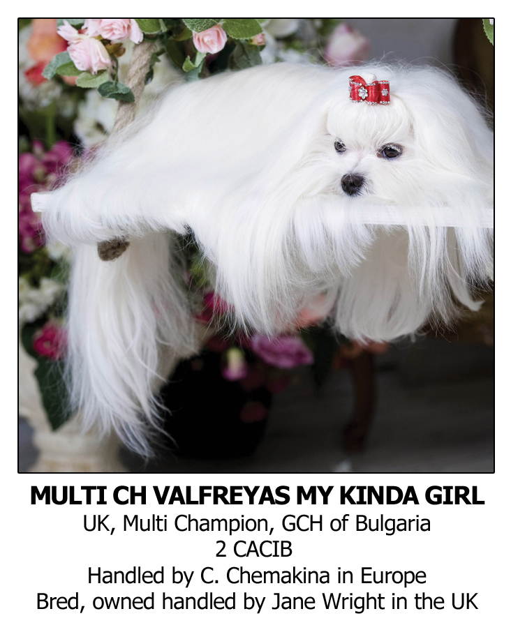 Best Dog Shampoo for Maltese