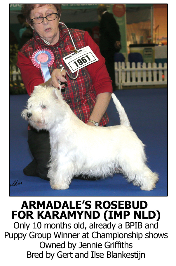 Best Shampoo Westy, West Highland Terrier Shampoo for White Coat and Texture