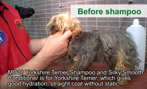 Click to enlarge - Before shampoo